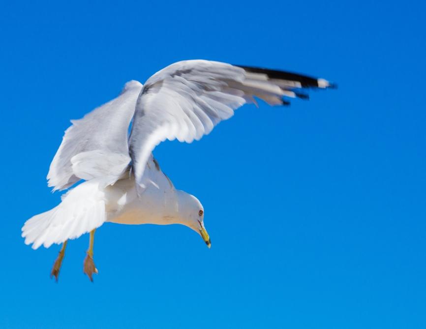 2. seagul