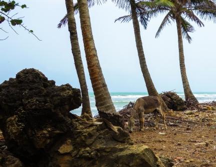 9. Donkey beach